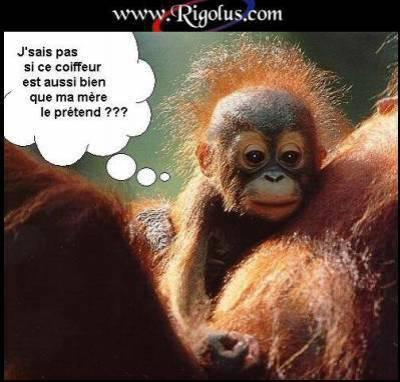 Funny Photo Frames: Image Drole Petit Singe